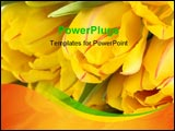 PowerPoint Template - bouquet of yellow tulips